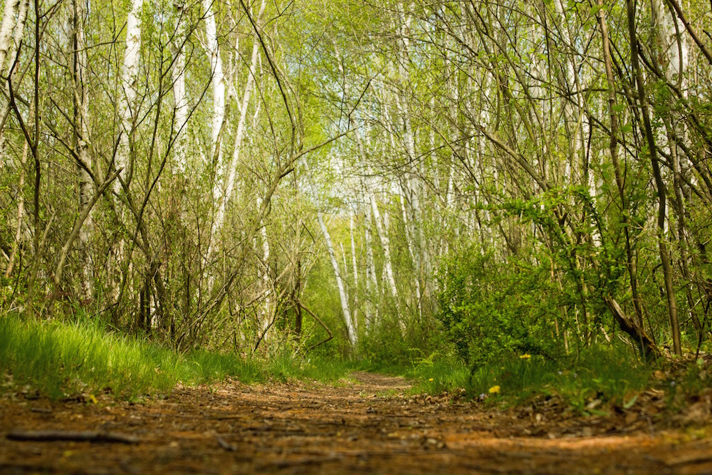 Magoon Creek Trail - photo credit Andrew Allen